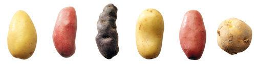 Le jardin des Plantes a la patate