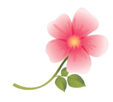 On a testé : le gommage doux à la Rose Musquée d'Hydraflore