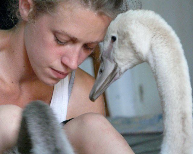 <em></noscript>Swan</em> de Luc Petton : une expérience «ornithochorégraphique»