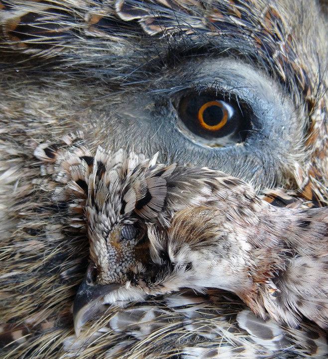 De l'homme à l'animal un pas, Julien Salaud le franchit galerie Suzanne Tarasieve.