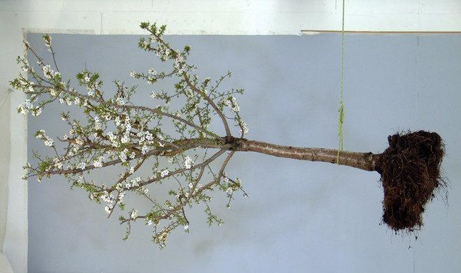 L'arbre de vie – foisonnement de l'art contemporain au Collège des Bernardins