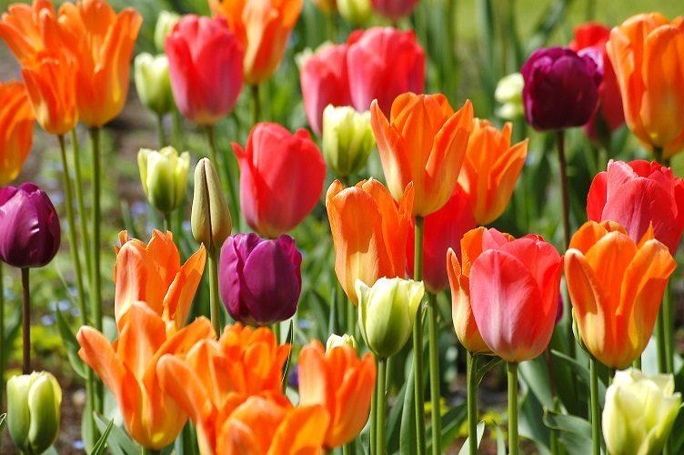 Hollande : l'intronisation du roi Willem-Alexander au coeur d'un printemps orange très culturel