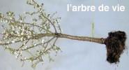 L-arbre-de-vie-au-college-des-Bernardins-20-rue-de-Poissy-Paris-5e.-Gratuit_portrait_w674