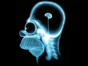 Homer-Brain-X-Ray-the-simpsons-60337_1024_768