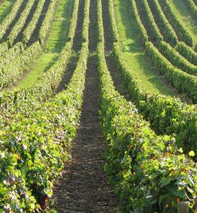 La France : premier producteur mondial de vin