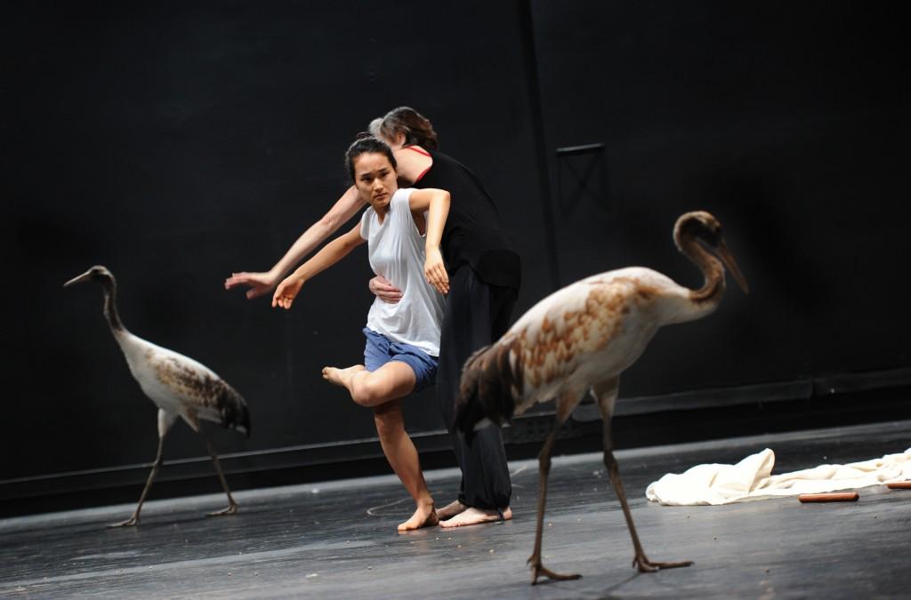 « Light Bird » au Théâtre de Chaillot : une sensibilisation à la nature