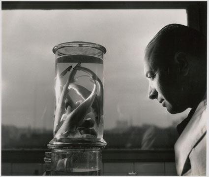Les regards de Doisneau sur le Muséum d'Histoire Naturelle