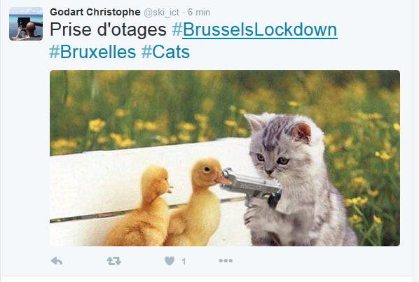 Alerte attentats à Bruxelles : les belges postent des photos de chat sur Twitter pour couvrir la police