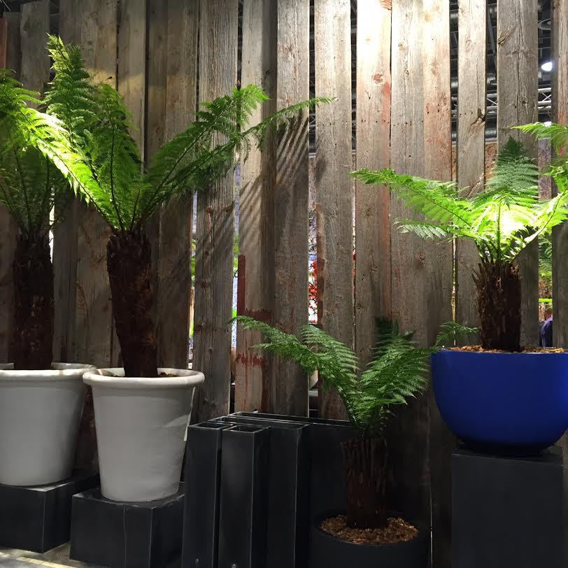 Maison et objet plante 6 - Plante citronnelle maison ...