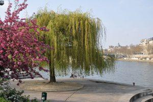 800px-paris_5e_jardin_tino_rossi_001