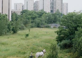 Le cheval de trait © Cyrille Weiner