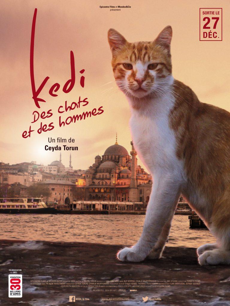 Kedi, des chats et des hommes, de Ceyda Torun [Les Arcs 2017]