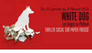 visuel-white-dog