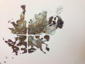 Extrait des dessins en galvanoplastie pour l'exposition Tara Pacific, 2018 @ Noémie Sauve