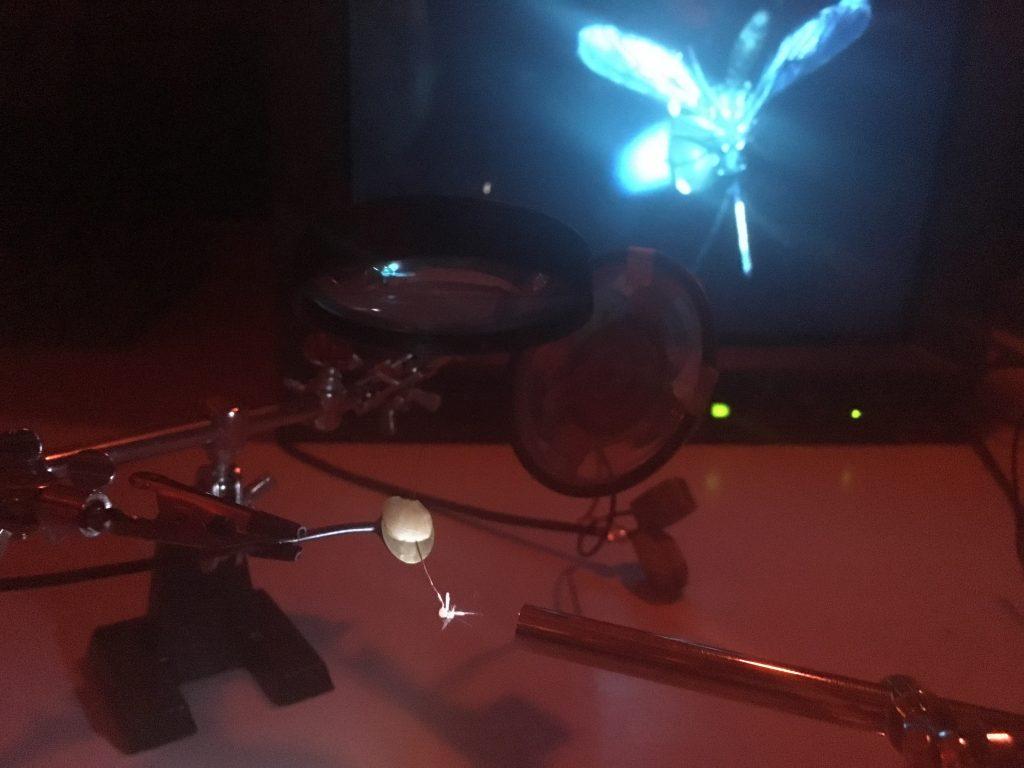 Synchronicity : une symphonie mélodieuse d'insectes à la Pop