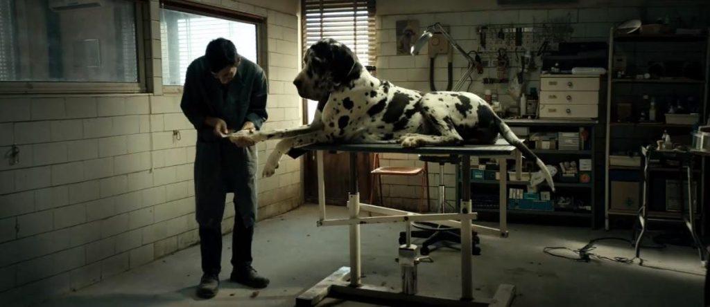 """""""Dogman"""" - Mattéo Carrone"""