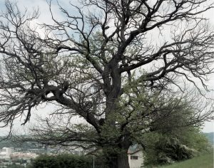 arbre-vj