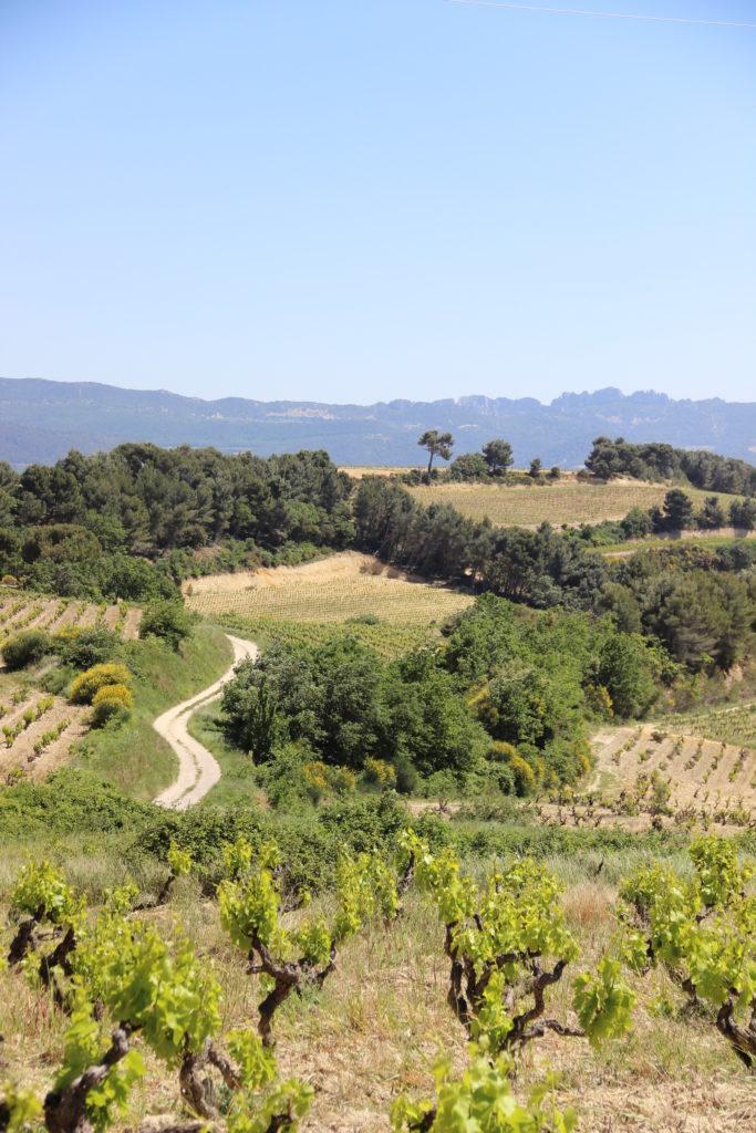 Randonnée gourmande dans les vignes à Rasteau