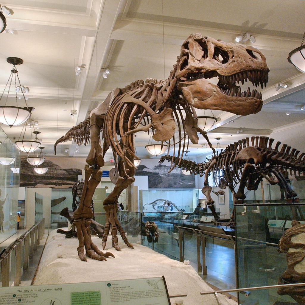 Une visite sensorielle au Musée Américain d'Histoire Naturelle