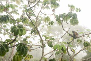 Wildlife : photo de Carlos Perez Naval