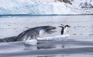 Wildlife : photo de Eduardo del Álamo