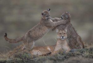 Wildlife : photo de Ingo Arndt