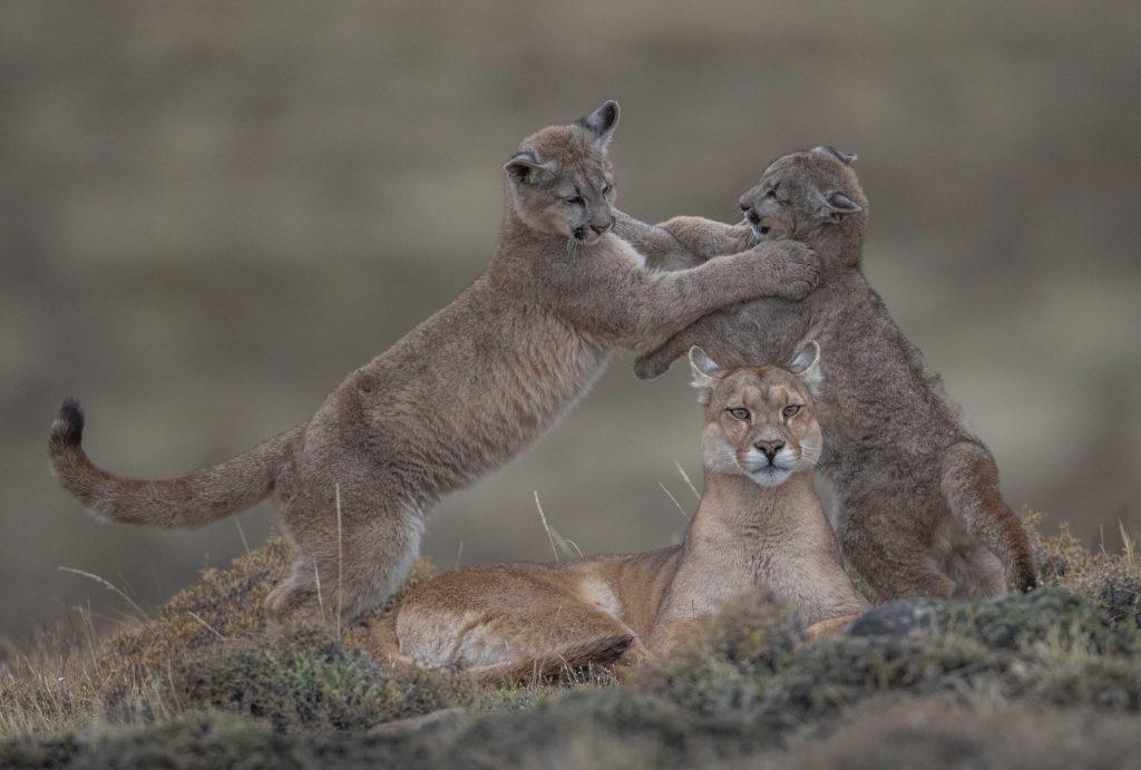 Exposition Wildlife Photographer of the Year : un bestiaire sauvage et émouvant s'expose à Elbeuf