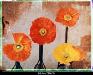 Julien DRACH - Still life polaroid