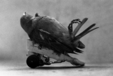 La mort, scellement de la vie