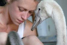 <em>Swan</em> de Luc Petton : une expérience «ornithochorégraphique»