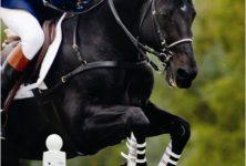 JAPPELOUP : Quand un petit cheval nous offre un grand moment de cinéma