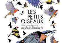 Les petits oiseaux de Béatrice Fontanel et Antoine Guilloppé