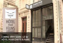 Un nouvel hôtel pour chats à Paris… Lol cat or not ?