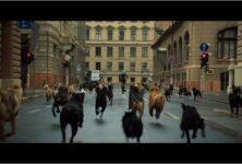 [Cannes, Un certain regard] « White God » : Kornel Mundruczo se met au niveau du chien