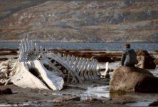 [Compétition] L'événement « Leviathan » : belle Russie qui châtie