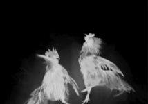 [Francophonies] « Kok batay » : un conte au souffle puissant