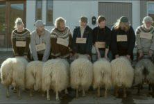 [Un Certain Regard] « Béliers » : belle et cruelle histoire de moutons islandais