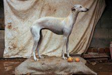 Martin Usborne, « Where Hunting dogs rest » à la Galerie Photo 12