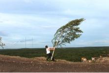 Grön Attitude et D'après Nature, l'Institut Suédois se met au vert