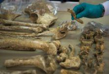Des restes du projet «Collection de squelettes juifs» retrouvés à Strasbourg.