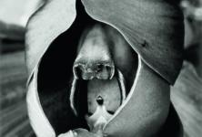 «Les choses» d'Albert Renger-Patzsch et le «souterrain» d'Ali Kazma au Jeu de Paume