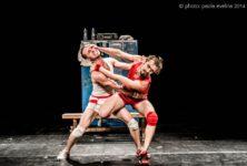 «Un poyo rojo»: combat de coqs enamourés
