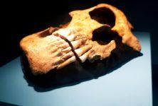 Neandertal L'expo – des siècles de fantasmes artistiques