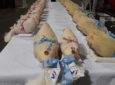 Les Glorieuses de Bresse, la fête des poules heureuses