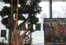 «Nous les Arbres» : la communauté boisée de la Fondation Cartier