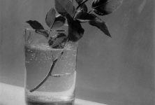 La fleur colonise la MÉCA