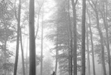 Taylor Swift : toujours dans la même forêt ?