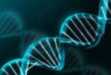 Le prix nobel de chimie attribué à Emmanuelle Charpentier et Jennifer Doudna pour leurs «ciseaux moléculaires»