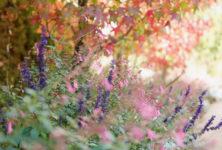Chantal Colleu-Dumond : «Les couleurs et la lumière d'automne sont ici exceptionnelles»