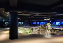 Plongez yeux écarquillés dans le tout nouvel Aquarium Tropical de Paris